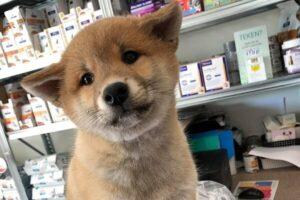 Slachtoffer broodfok puppyhandelaar in Diessen