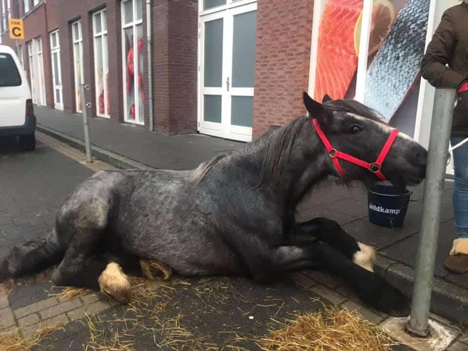 paardenmarkten