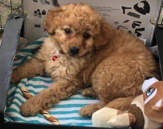 Puppy gekocht bij de Meiboom