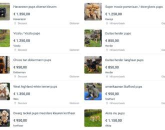 House-of-animals-marktplaats-pups-te-koop