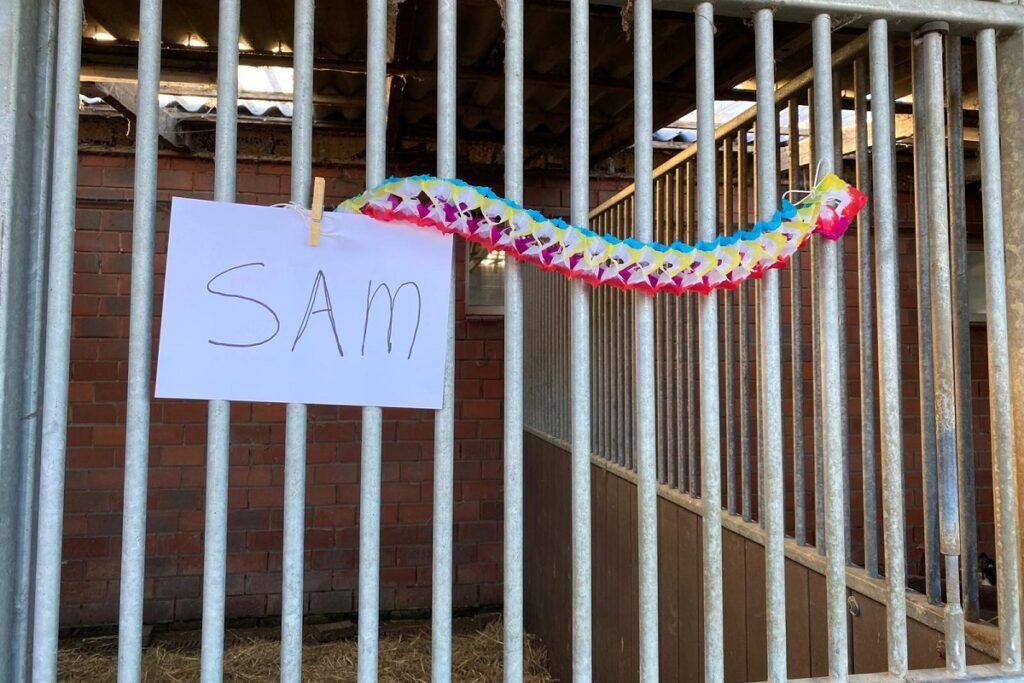 verblijf varken Sam