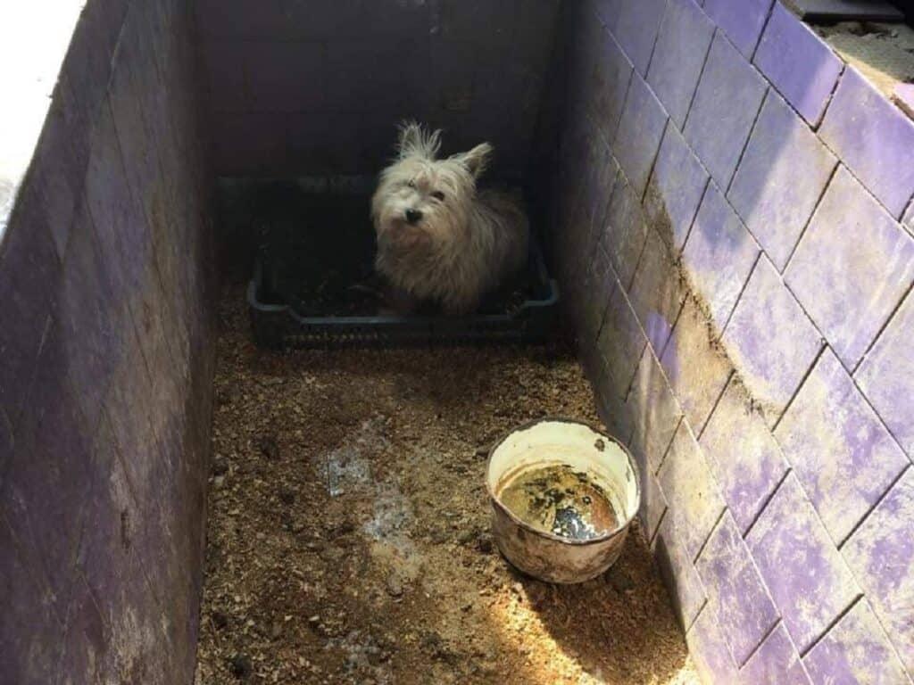 Hongaarse dierenartsen frauderen met in Nederland verkochte puppy's