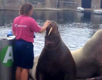 Wat is de stand van zaken rond het transport van 12 zeezoogdieren uit het Dolfinarium naar China?